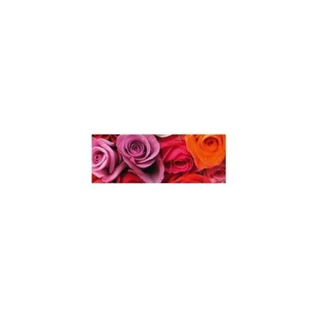 Blahoželanie Roses 21x8cm